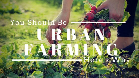 You Should Be Urban Farming Already! Here's Why